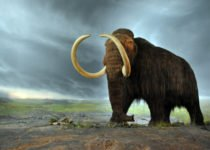 Woolly Mammoth
