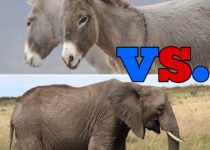 Donkey vs. Elephant