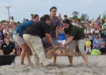 Peanut sea turtle release