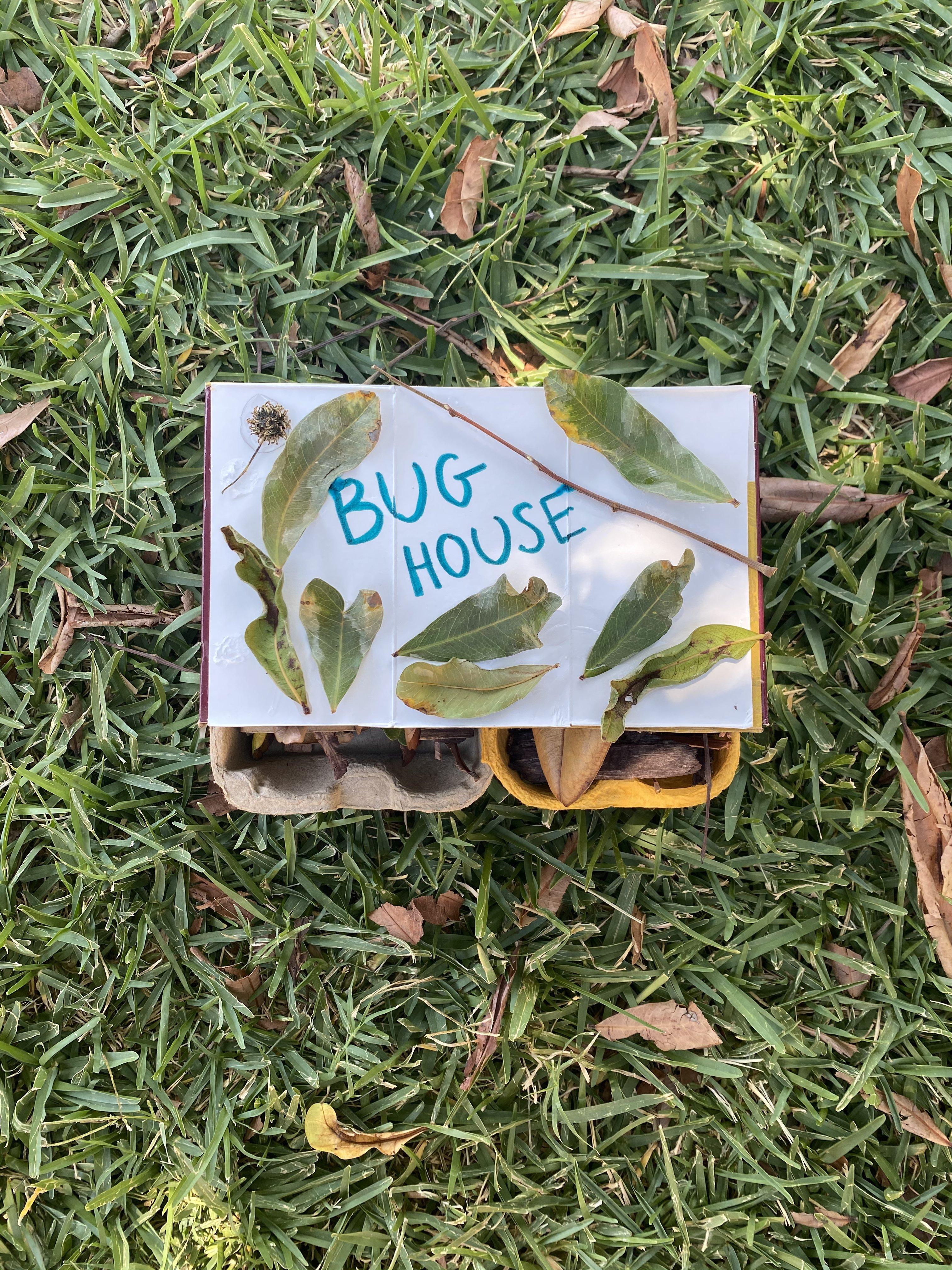 Bug House 6