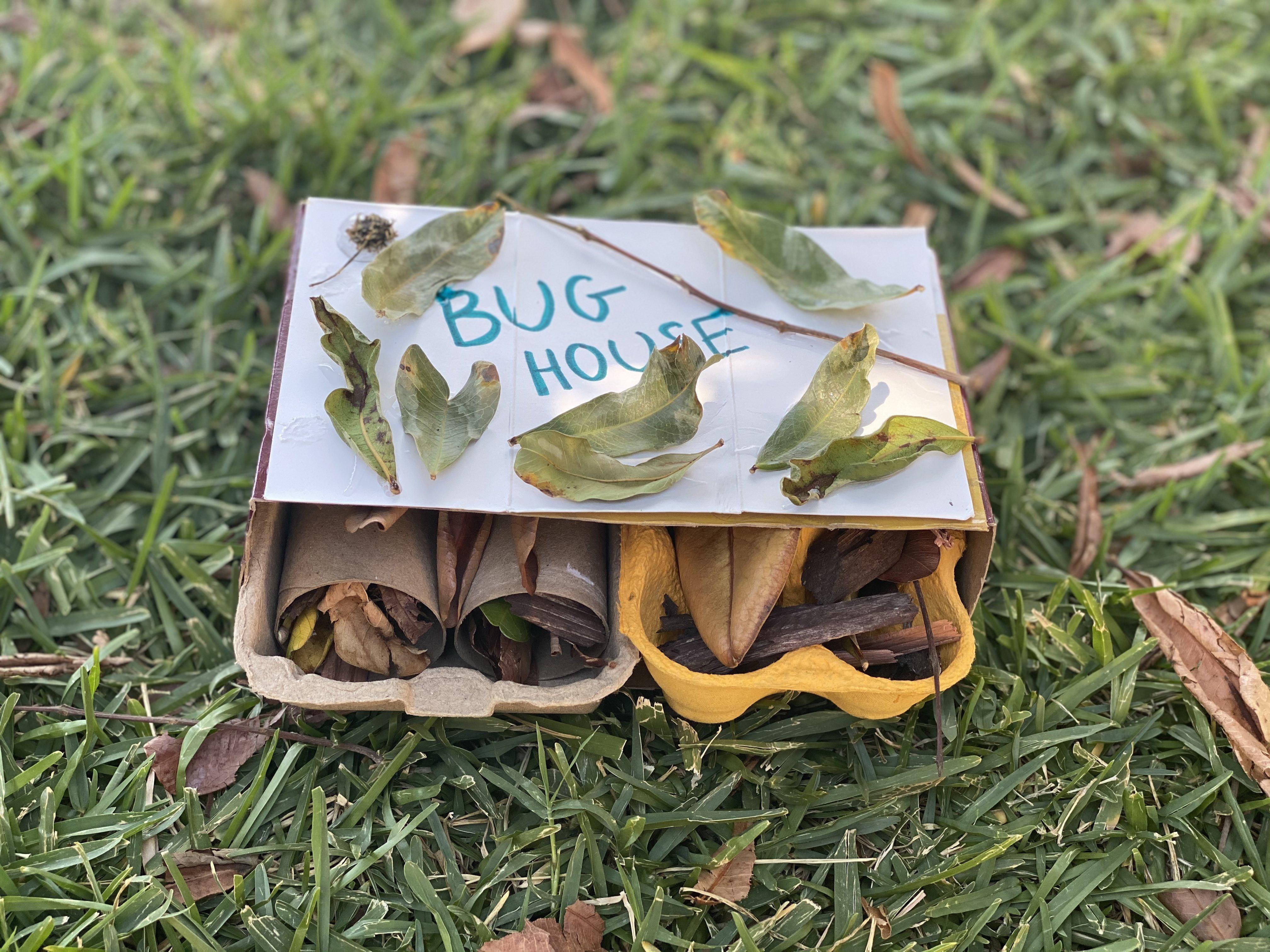 Bug House 1